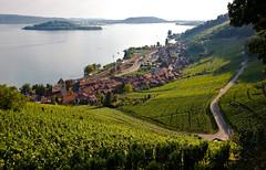 Twann am Bielersee (Stefan Toth) Tags: schweiz switzerland vineyard weinberg twann bielersee