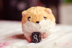 "little hamster: ""I am a photographer!"" ♥ (Natália Viana) Tags: cute love miniature photographer lubitel166 miniatura câmera pelúcia littlehamster natáliaviana"