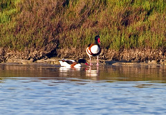 Pareja de patos (ibzsierra) Tags: bird canon duck natural salinas ibiza ave 7d eivissa oiseau canard baleares patos parke reservanatural blinkagain