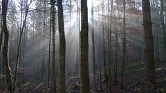 Morgennebel (Aah-Yeah) Tags: sun sunlight sunshine fog bayern ray nebel sonne sonnenstrahlen sunbeams achental morgennebel chiemgau lichtblick