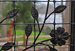 Flower on the Grid (BKHagar *Kim*) Tags: metal yard river grid al gate iron alabama athens ironwork riversong bkhagar