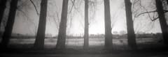 (PIN HOLE) An der Elbe - At the river Elbe (nemodoteles) Tags: life tree film nature forest germany relax flow deutschland fotografie path saxony lofi pinhole iso negative naturereserve sachsen rest pinholecamera relaxation fluss wald allemagne analogphotography baum elbe kamera pawn leben weg negativ lowfi naturschutzgebiet lowtech linse entspannung objektiv ruhe pfand riverelbe f140 natrur lowfiphotography lowtechphotography lowfifotografie lowtechfotografie psahranwide