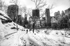 Winter on Central Park,New York . #snow #centralpark #manhattan #newyork #newyorkcity #nyc #winter #blackandwhite #blackwhite #bw #landscape (lelobnu) Tags: nyc newyorkcity winter blackandwhite bw snow newyork landscape blackwhite centralpark manhattan