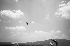 (Ivn Rubn) Tags: travel viaje sky bw detail monochrome clouds rural butterfly contraluz libertad freedom countryside fly time air bn cielo nubes campo instant delicate mariposa aire subtle tiempo yearning instante volar monocromtico delicado anhelo nimiodetalle backlightingsutil