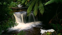 Waterfall (Emily Rainbow-Nordern) Tags: nature outdoors waterfall tasmania ferns tassie