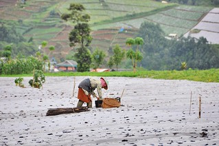 dieng plateau - java - indonesie 25