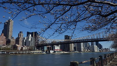 Clear Day Over 59th St. Bridge with Flowering Trees - IMGP4211 (catchesthelight) Tags: skyline buildings manhattan bluesky views eastriver queensborobridge rooseveltisland floweringtrees 59thstbridge tudorcity newyorkcityny springvisit edkochbridge april2016