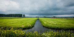 Symmetry @ Mijdrecht (PaulHoo) Tags: sky panorama holland reflection nature water netherlands rain yellow clouds contrast landscape lumix spring pano seed farmland threat 2016 mijdrecht