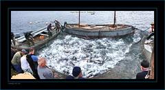 """LEVANT DE BONITOS (CODIGO DE LUZ """"El Fotgrafo"""") Tags: de mar sur marla ceuta bonitos almadraba atunes artedepesca galeones luzel ceutalaperladelmediterrneo gutierrezpepe gutierrezcdigo levantizandolaredpescabahia ceutapescadoresredesp"""