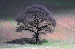 Tree in a Ploughed Field. (wentloog) Tags: uk plant tree field wales canon landscape eos spring britain outdoor farm steve cymru cardiff caerdydd lone 5d lonely agriculture ploughed 100400 garrington wentloog