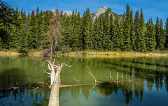 tree at bow river - banff (canada - AB) (Russell Scott Images) Tags: canada mountains reflections nationalpark rocky alberta banff bowriver