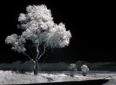 IR - Winding road (Bright Sparrow) Tags: road tree ir australia nsw infrared