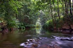 (J N Photography) Tags: france reflection nature water forest landscape sony rivire reflet paysage foret arbre f28 dt ssm auvergne ruisseau 1650mm alpha77 dt1650mmf28ssm sonyalpha77 jeremynuyten