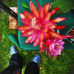 Gathering wisdom from flowers (Dom Guillochon) Tags: life flowers people nature self outdoor wisdom epiphytes