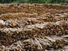 a wood sea (ludi_ste) Tags: wood sea texture mare trunks legna tagli tronchi legname riserve