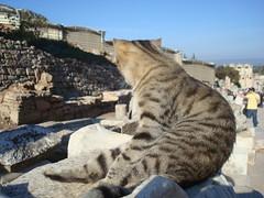 2012 Selchuk (charlieangel_br) Tags: ephesus libraryofcelsus historicalsite cat turkey