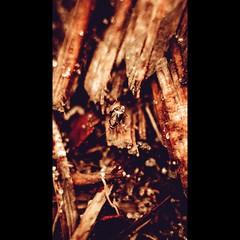 Insect /  (aleksejchervjakov) Tags: red black macro beautiful canon dark insect amazing latvia canon5d macros makro riga  photooftheday macrophotography  rga canonphotos       canon5dmarkii mezciems