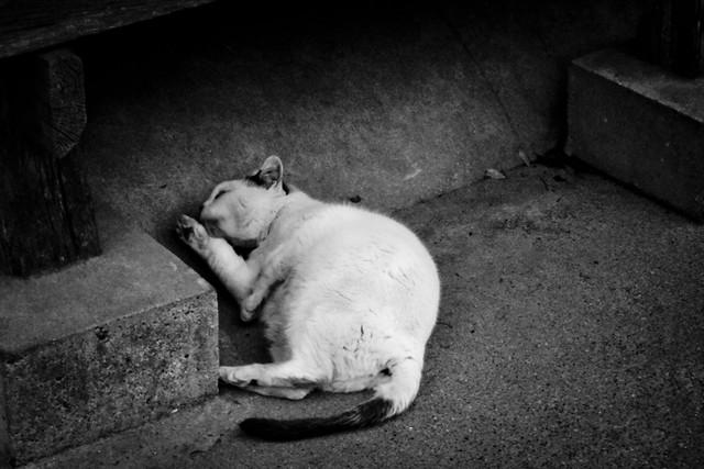 Today's Cat@2012-02-26