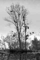 POINTILLISME (Alain ) Tags: blackandwhite bw reflection nature blackwhite noiretblanc hiver nb reflet lumiere bianconero noirblanc pointillism pointillist pointilliste pointillisme schwarzundweiss