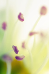 (osky_toxic) Tags: naturaleza blur flower macro verde green nature yellow focus soft colours purple natural flor colores amarillo desenfoque atmosfera suave sensation ambiente morado enfoque pistilos atmosphear sensacion hipermacro oskytoxic