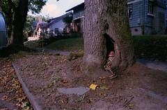 gnome in a tree (box with a lens) Tags: film oregon 35mm portland nikon kodak iso400 pdx portra 400iso portra400 nikonn65 n65 keepportlandweird newportra