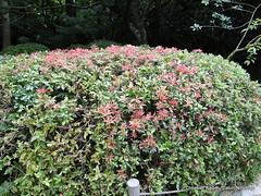 DSC02289 (Christian Kaden) Tags: japan kansai kioto kyoto ryoanji tempel temple