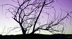 South Sunset (_Ensemble_) Tags: sunset nature tramonto natura albero viola treet viole contrasto