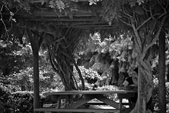 A shady spot (Deb Jones1) Tags: park travel trees bw green monochrome beauty canon garden botanical flora australia places vista flickrduel debjones1
