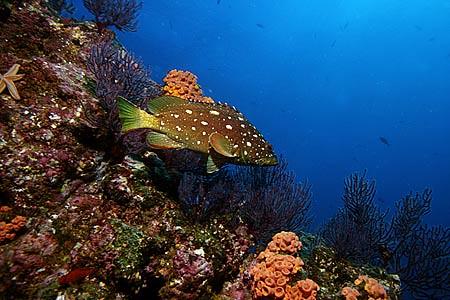 Mar di Cortez