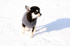 Be careful to the dog (CarloAlessioCozzolino) Tags: dog snow cane neve highqualitydogs