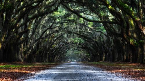 Oak Avenue