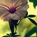 flower (explored)