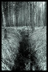 Deep in the Woods (rodvelt) Tags: bw white black water norway creek canon geotagged norge woods hdr mandal 3xp 24105mm risøbank