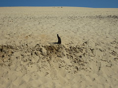 The cat (Can Ozan) Tags: art beach cat photo arcachon duneofpyla