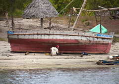 A Shipbuilder On The Sand Beach Of Lamu, Kenya (Eric Lafforgue) Tags: africa red color beach horizontal island photography paint kenya body culture crescent unescoworldheritagesite repair afrika hull tradition lamu skiff oneperson swahili afrique eastafrica qunia lamuisland lafforgue traveldestination kenyaafrica  qunia transportationtransport  menman   kea exterioroutdoors seaindianocean   tradingroute 169625 a dhowboatwoodenjahazi zingatiya