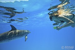WidQuest Dolphin Swim - 2/14 (Wildquest Bimini) Tags: wild swimming swim underwater dolphin snorkeling bahamas dolphinquest wildquest dolphinunderwater underwaterdolphin lagoon410 atmoji