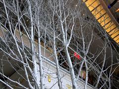 (Shane Henderson) Tags: christmas nyc newyorkcity decorations white newyork tree sign architecture logo gold lights manhattan interior branches inside columbuscircle williamssonoma timewarnercenter midtownmanhattan shopsatcolumbuscircle