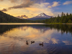 Trillium Sunset Tranquility (RobertCross1 (off and on)) Tags: trees sunset summer mountain lake snow reflection nature water birds clouds oregon forest landscape atardecer volcano or ducks bluesky olympus glacier cascades pacificnorthwest mounthood omd cascaderange trilliumlake puestadelsol clackamas mounthoodnationalforest em5 1250mmf3563mzuiko