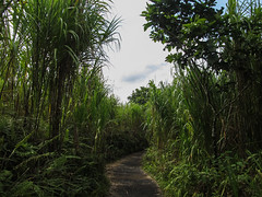 "Parc National Arenal <a style=""margin-left:10px; font-size:0.8em;"" href=""http://www.flickr.com/photos/127723101@N04/26295743263/"" target=""_blank"">@flickr</a>"