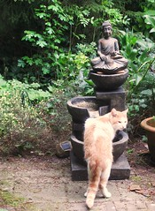 visiting cat (streamer020nl) Tags: fountain cat garden kat chat katze tuin buddah garten 2016