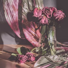 Fading (Vanili11) Tags: red roses stilllife flower green square squareformat format fadedrose