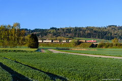 261 032 - Langelsheim (tog-i-danmark) Tags: de deutschland eisenbahn db april harz hok harzvorland goslar oker niedersachsen 2016 gterzug verkehrsmittel dbcargo bergabe gravita voith langelsheim dbschenker 10bb 261032 hbsr braunschweigrbf hlng ek53901