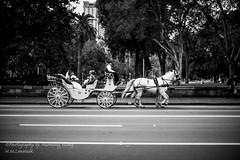 MONO7214 (H.M.Lentalk) Tags: life leica city wedding people urban white black monochrome 50mm carriage sydney australia m noctilux aussie 50 asph f095 typ 246 095 noctiluxm 109550