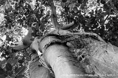Palermo (Lord Seth) Tags: bw italy nikon palermo albero radici sicilia biancoenero 2015 giardinobotanico d5000 lordseth