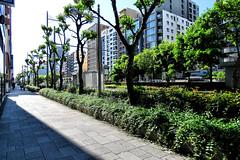 sidewalk, Nagahori-dori (street), Osaka (jtabn99) Tags: road street sky japan sidewalk   nippon osaka  fineday  nagahoridori  localtonemapping 20160512