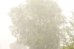 Heavy rain and hail (William Sc) Tags: tree wet rain weather hail wind windy