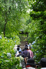 20160528-D7-DS7_3016.jpg (d3_plus) Tags: street sky plant flower building history nature japan temple nikon scenery shrine kamakura daily architectural telephoto bloom  tele streetphoto nikkor   tamron    shintoshrine  buddhisttemple dailyphoto sanctuary 28300mm   thesedays kitakamakura   28300     holyplace historicmonuments tamron28300mm  ancientcity   tamronaf28300mmf3563    a061  architecturalstructure telezoomlens d700  tamronaf28300mmf3563xrdildasphericalif nikond700   a061n