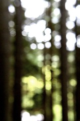 156.365.2016 (johnny the cow) Tags: trees sunlight abstract wales woodland photo bokeh diary cymru outoffocus aberystwyth collection 365 catalogue dappled ceredigion 2016 aphotoaday 366 llanafan