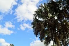 DSC_0226 (2) (melissa@chlk.org) Tags: ocean landscape florida wildlife palmtrees palmbeach waterscape