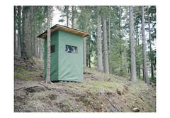 (harald wawrzyniak) Tags: wood tree mamiya film nature analog forest austria kodak scan medium format analogue harald portra 120mm styria 2016 645af wawrzyniak